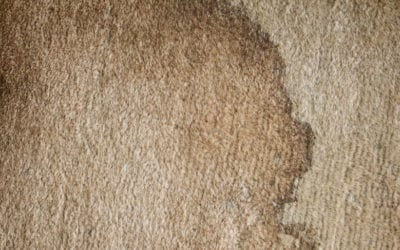 What to Do When Spots Reappear in Your Carpet